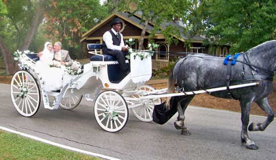 Horse Carriage Rides Texas, Wedding Horse Carriage, Horse Drawn